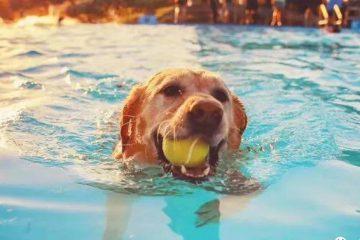 狗的游泳课在上海很受欢迎